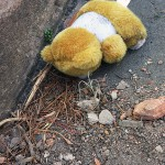 Another dead teddy