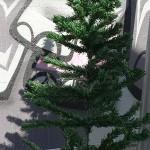 Another dead Xmas tree